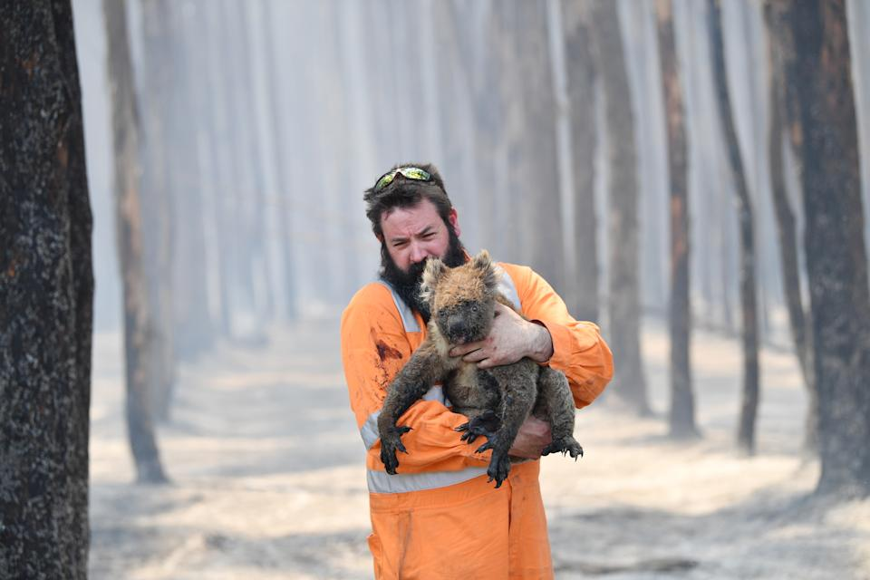 A wildlife rescuer carries a koala out of a burning forest on Kangaroo Island. Source: AAP