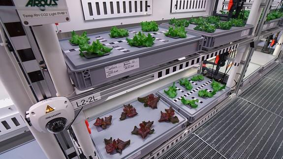 "<img alt=""""/><p>This indoor farm allows scientists to grow plants on Antarctica, without the need for soil.</p>"