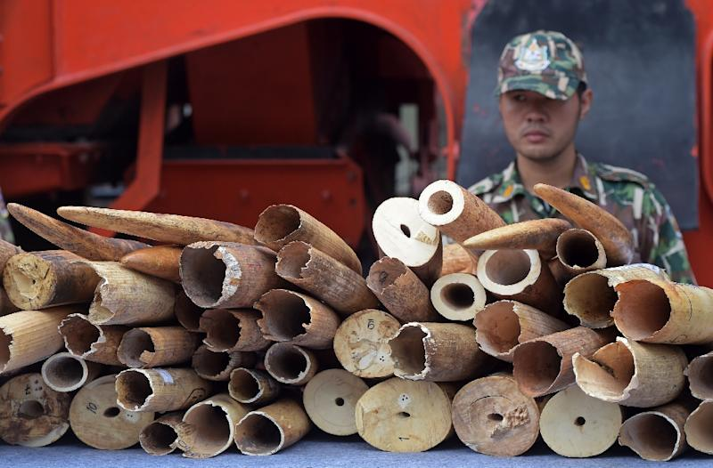 Trade in ivory was banned in 1989 - but that has not stopped criminal gangs seeking to exploit a continued demand for tusks in Asia (AFP Photo/Pornchai Kittiwongsakul)