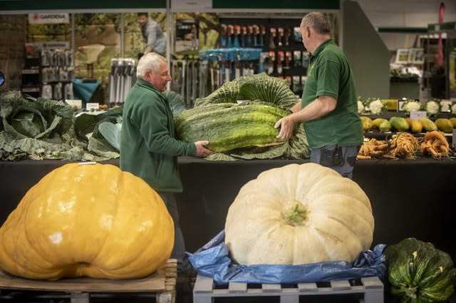 Harrogate Autumn Flower Show giant vegetable competition