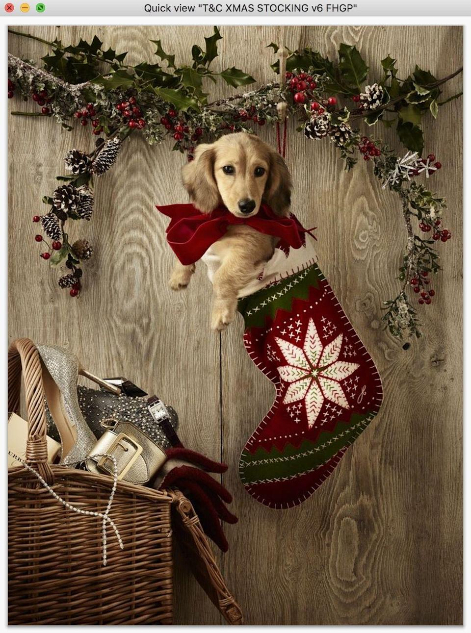 <p>'Tis the season to bestow gifts upon your beloved pets, whether pampered pooches or cosseted kittens. From a cosy new bed to a shiny new collar or some tasty treats, here are some of our favourite ways to show your four-legged companion some love this Christmas.</p>