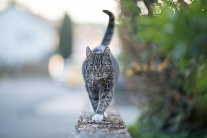 A cat in Belgium (not pictured) may be the first known case of a feline contracting COVID-19. (Photo: Nils Jacobi via Getty Images)