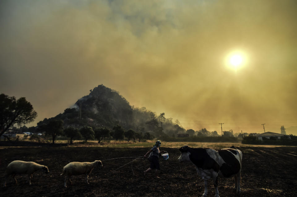 A woman leaves with her animals from an advancing fire that rages Hisaronu area, Turkey, Monday, Aug. 2, 2021. For the sixth straight day, Turkish firefighters battled Monday to control the blazes that are tearing through forests near Turkey's beach destinations. Fed by strong winds and scorching temperatures, the fires that began Wednesday have left eight people dead. Residents and tourists have fled vacation resorts in flotillas of small boats or convoys of cars and trucks. (AP Photo)