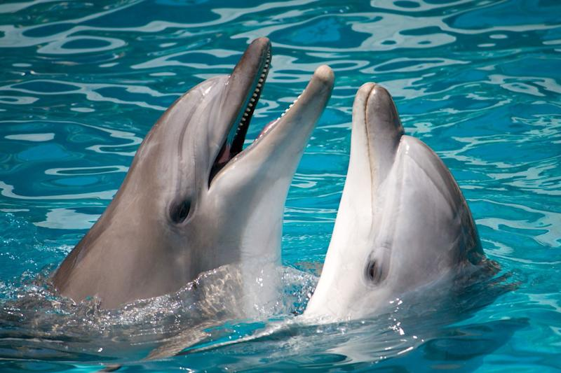 Scientists have recorded two dolphins having a chat