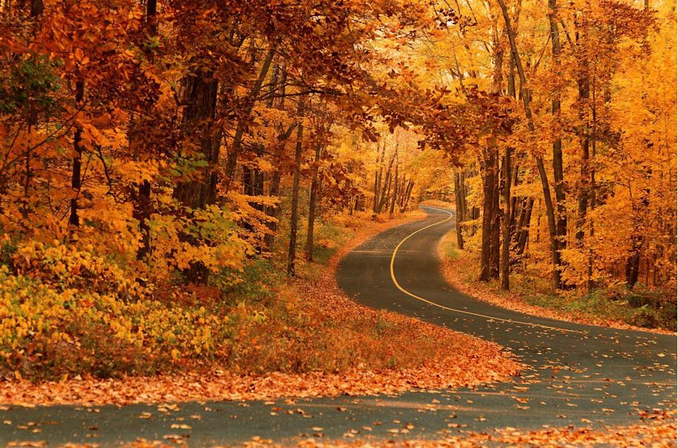<p>As trees come alive with fall colors, take a drive down an open country road just to enjoy the beautiful scenery. </p>