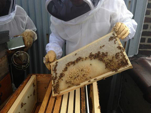 Buzz in NYC? Hobbyists Swarm to Beekeeping