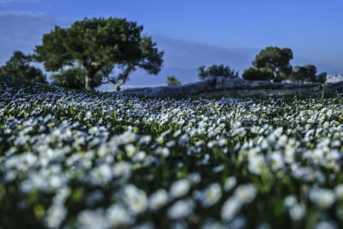 Flowers blossom on a hill in central Athens as average temperatures remain high for the season on February 18, 2020.