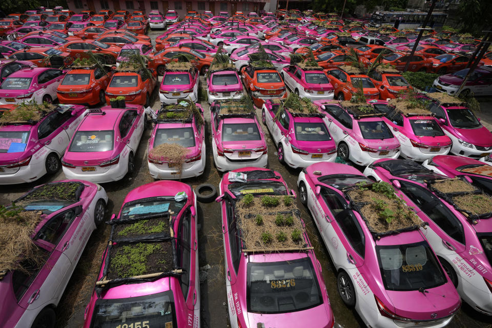 """Miniature gardens are planted on the rooftops of unused taxis parked in Bangkok, Thailand, Thursday, Sept. 16, 2021. Taxi fleets in Thailand are giving new meaning to the term """"rooftop garden,"""" as they utilize the roofs of cabs idled by the coronavirus crisis to serve as small vegetable plots and raise awareness about the plight of out of work drivers. (AP Photo/Sakchai Lalit)"""