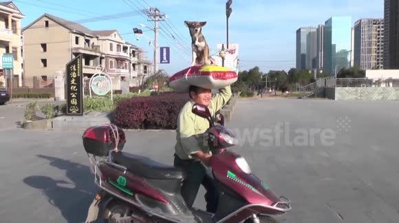 Dog sits on its owner's head in China [影片]