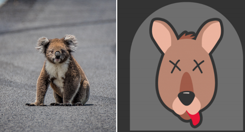 Pictured on the left is a stock image of a koala on a road surrounded by skid marks. On the right is the Roadkill Reporter app logo.