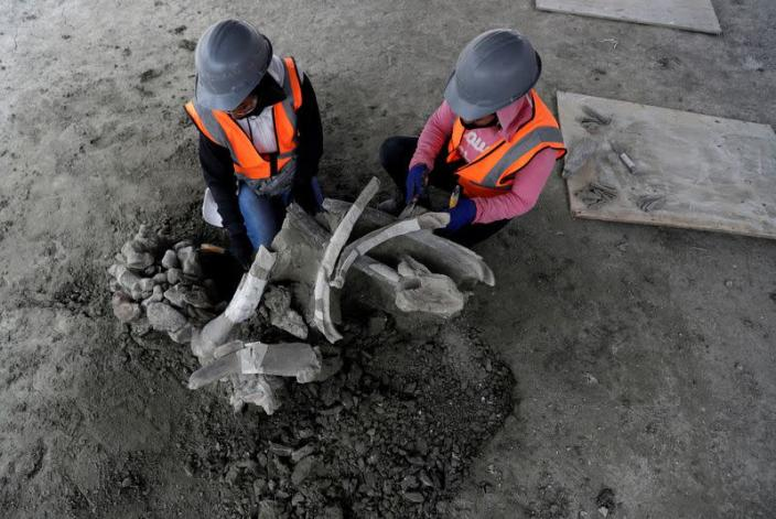Workers of Mexico's National Institute of Anthropology and History (INAH) work at a site where more than 100 mammoth skeletons have been identified, along with a mix of other ice age mammals, in Zumpango