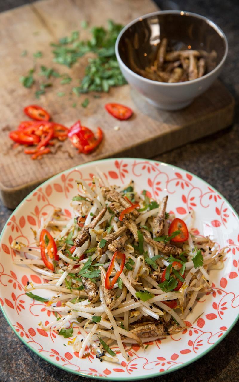 Spicy Grasshoppers with Bean Sprouts - Credit: Heathcliff O'Malley