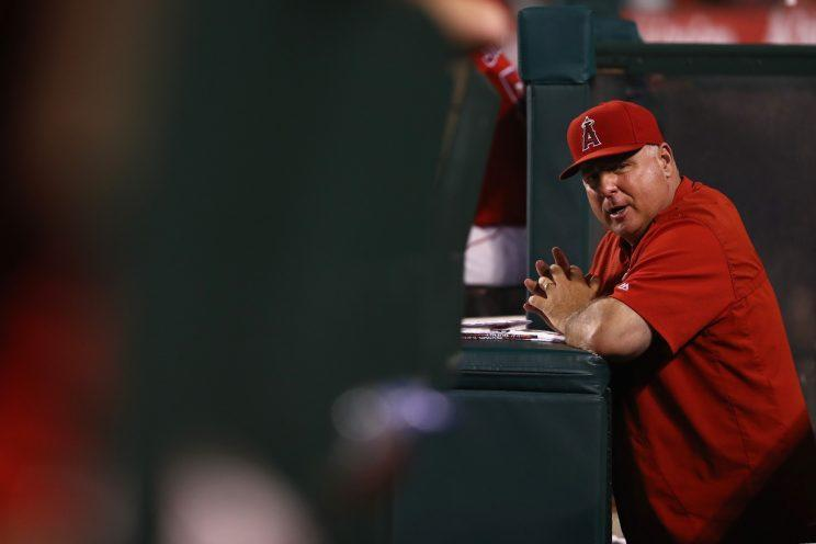 It would be a shock if the Angels parted ways with Mike Scioscia. (Getty Images/Sean M. Haffey)