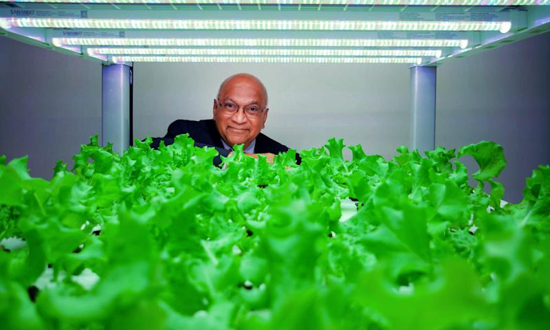 Ajit George of Second Chances Farm looks out over fresh lettuce growing in a vertical garden prototype. He wants to build an indoor farm in Wilmington's Riverside neighborhood to grow fresh food for the neighborhood and employ ex-offenders.