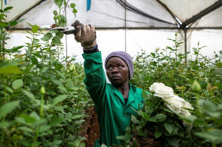 Flower workers are already deeply worried about their future. The industry indirectly supports four million people