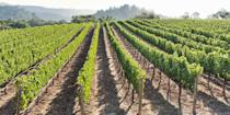 """<p><strong>Best for Wine Lovers </strong></p><p>There's a lot to love about Napa Valley. It's just an hour's drive from <a href=""""https://www.bestproducts.com/fun-things-to-do/g2691/fun-things-to-do-in-san-francisco-sf/"""" rel=""""nofollow noopener"""" target=""""_blank"""" data-ylk=""""slk:San Francisco"""" class=""""link rapid-noclick-resp"""">San Francisco</a>, there are hundreds of <a href=""""https://www.bestproducts.com/fun-things-to-do/g2610/scenic-napa-valley-wineries-and-tours/"""" rel=""""nofollow noopener"""" target=""""_blank"""" data-ylk=""""slk:world-class wineries"""" class=""""link rapid-noclick-resp"""">world-class wineries</a> to stop in for a tasting (A pinot noir on the deck overlooking vast vineyards? Yes, please!), and there are plenty of gourmet restaurants, including Thomas Keller's famed <a href=""""https://go.redirectingat.com?id=74968X1596630&url=https%3A%2F%2Fwww.tripadvisor.com%2FRestaurant_Review-g33300-d493634-Reviews-The_French_Laundry-Yountville_Napa_Valley_California.html&sref=https%3A%2F%2Fwww.countryliving.com%2Flife%2Fg37186621%2Fbest-places-to-experience-and-visit-in-the-usa%2F"""" rel=""""nofollow noopener"""" target=""""_blank"""" data-ylk=""""slk:French Laundry"""" class=""""link rapid-noclick-resp"""">French Laundry</a>. </p><p><strong><em>Where to Stay: </em></strong><a href=""""https://go.redirectingat.com?id=74968X1596630&url=https%3A%2F%2Fwww.tripadvisor.com%2FHotel_Review-g32766-d81242-Reviews-Napa_Valley_Marriott_Hotel_Spa-Napa_Napa_Valley_California.html&sref=https%3A%2F%2Fwww.countryliving.com%2Flife%2Fg37186621%2Fbest-places-to-experience-and-visit-in-the-usa%2F"""" rel=""""nofollow noopener"""" target=""""_blank"""" data-ylk=""""slk:Marriott Napa Valley Hotel & Spa"""" class=""""link rapid-noclick-resp"""">Marriott Napa Valley Hotel & Spa</a>, <a href=""""https://go.redirectingat.com?id=74968X1596630&url=https%3A%2F%2Fwww.tripadvisor.com%2FHotel_Review-g32766-d1141009-Reviews-The_Westin_Verasa_Napa-Napa_Napa_Valley_California.html&sref=https%3A%2F%2Fwww.countryliving.com%2Flife%2Fg37186621%2Fbest-places-to-experience-and-visit-in-th"""