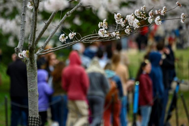 """Washington's public transportation authority closed two metro stops closest to the Tidal Basin """"to prevent cherry blossom travel"""""""
