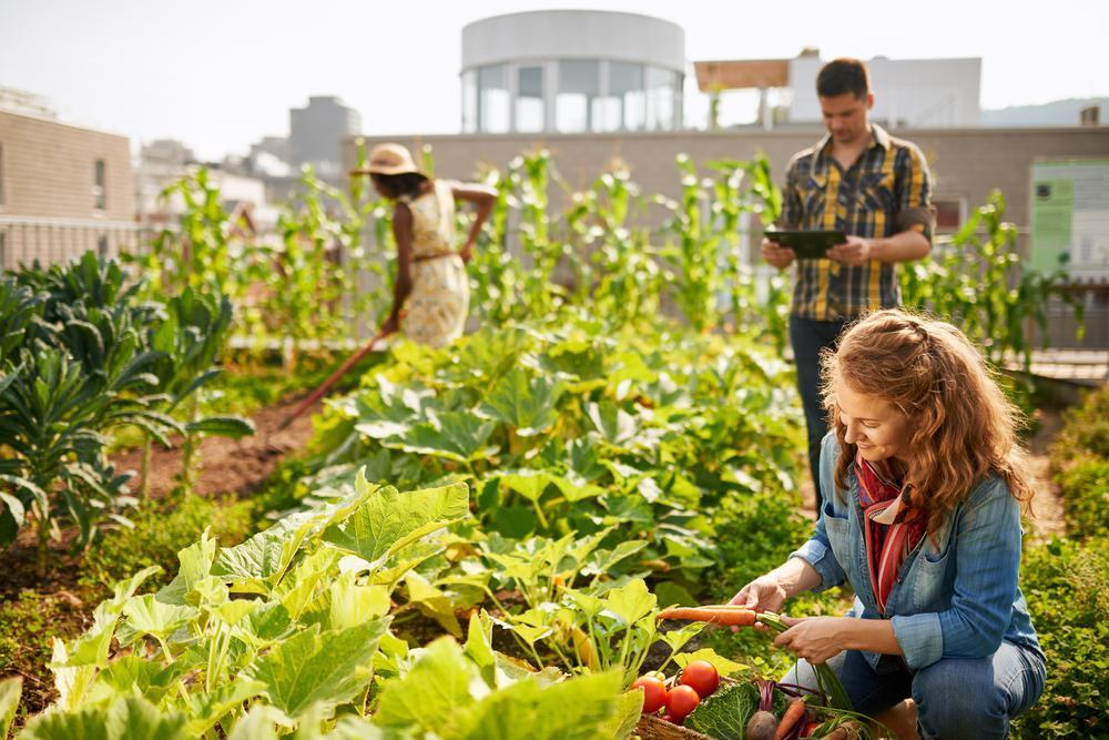 """<p>According to Nestle, whose books include """"Food Politics,"""" """"Safe Food"""" and """"What to Eat,"""" the current definition for sustainable food is """"regenerative."""" Regenerative, in this case, simply means """"putting back into the soil what gets taken out,"""" she said. """"The idea of sustainable food is built on principles that further the ecological, social and economic values of a community as a whole.""""</p>"""