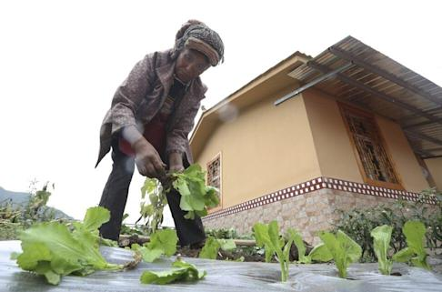 A Tibetan woman plants vegetable next to her village home. In Qingshui village, in Liaoping township of Ganluo county, Liangshan prefecture, there is a population of 721 in 212 households, and the registered poor population is 319. Villagers were resettled in new houses in 2019. Photo: Simon Song