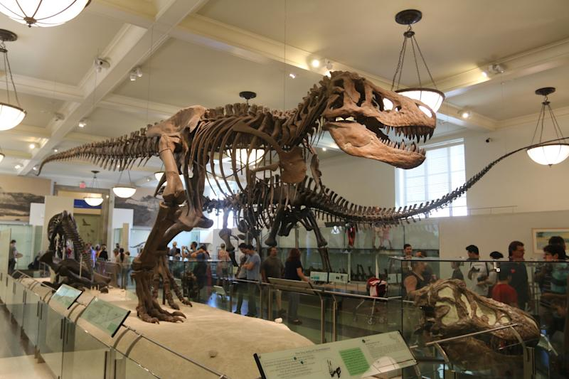 The American Museum of Natural History Is Hosting Adult-Only Sleepovers This Summer
