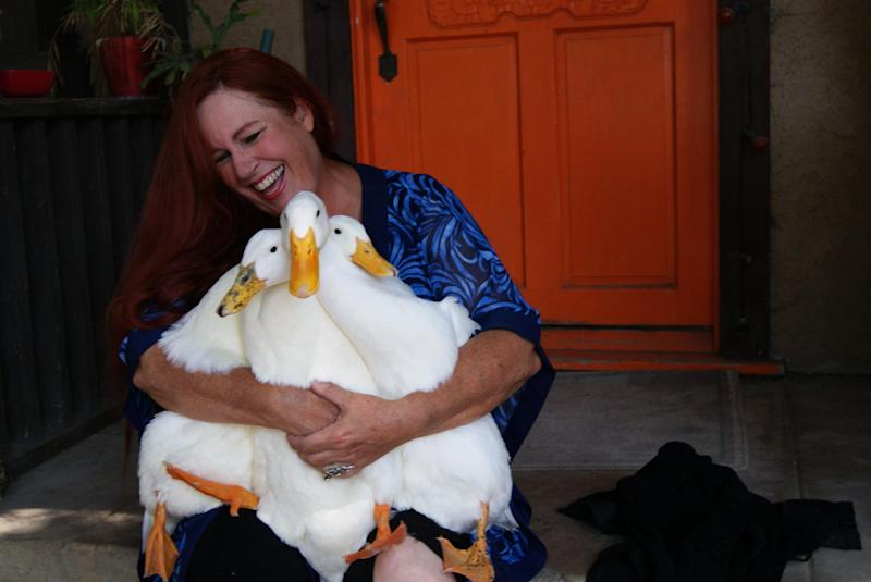 In this July 22, 2012 photo provided by Lydia Yasuda, Carol Chrysong founder of The Lucky Duck Rescue & Sanctuary in Los Angeles holds pekin ducks at the sanctuary in Sun Valley, Calif. If a parent has a child who really wants a duck, visit a shelter or zoo and watch the ducks, Chrysong advised. Parents have to remember that ducks live 20 years and more, and it's unlikely the child can take the duck to college. (AP Photo/Lydia Yasuda)