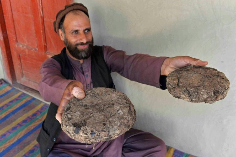 Crushed by virus and war, jobless Afghans turn to opium for cash
