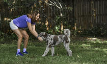 """Michele Hall plays with her dog Beau in their backyard Thursday, June 24, 2021, in Bradenton, Fla. Hall, 54, diagnosed with early Alzheimer's last year, calls the new drug Aduhelm """"the first tiny glimmer of hope"""" she'll get more quality time with her husband and their three adult children. (AP Photo/Steve Nesius)"""