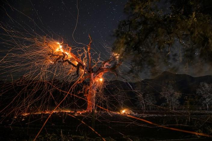 A long exposure photograph shows a tree burning during the Kincade fire off Highway 128, east of Healdsburg, California on October 29, 2019 (AFP Photo/Philip Pacheco)