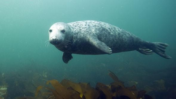 Marine wildlife in the UK