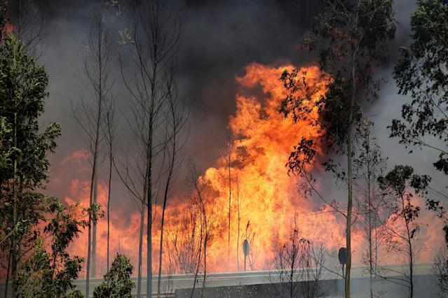 <p>Fire and smoke is seen on the IC8 motorway during a forest fire near Pedrogao Grande, in central Portugal, June 18, 2017. (Miguel Vidal/Reuters) </p>