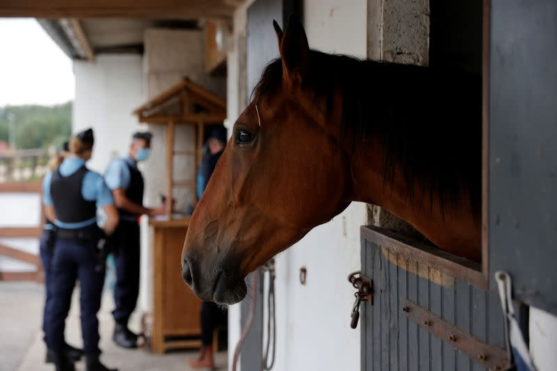 Fearful French horse owners want mystery mutilator caught