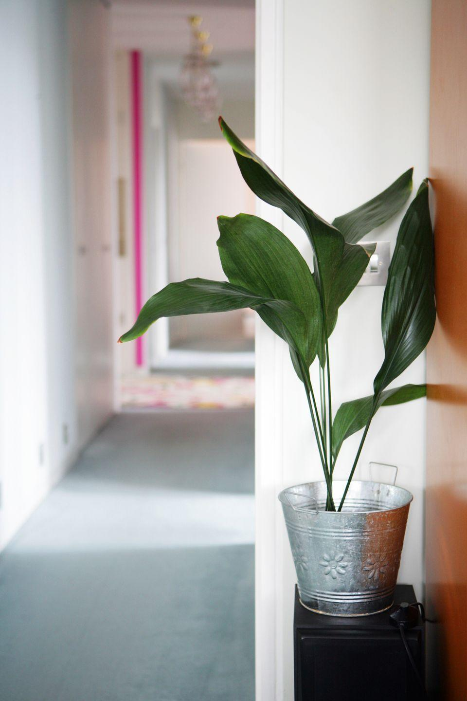 """<p><a class=""""link rapid-noclick-resp"""" href=""""https://www.amazon.com/Costa-Farms-Spathiphyllum-Indoor-Excellent/dp/B01ERMWI9M/?tag=syn-yahoo-20&ascsubtag=%5Bartid%7C10057.g.3716%5Bsrc%7Cyahoo-us"""" rel=""""nofollow noopener"""" target=""""_blank"""" data-ylk=""""slk:BUY NOW"""">BUY NOW</a> <strong><em>$21, amazon.com</em></strong></p><p>These beautiful flowering plants are surprisingly easy to grow. Just keep the soil moist (but avoid overwatering!) and mist its leaves regularly, and you'll have a happy plant. Oh, and while they prefer some light, make sure you keep them out of direct sunlight. </p>"""