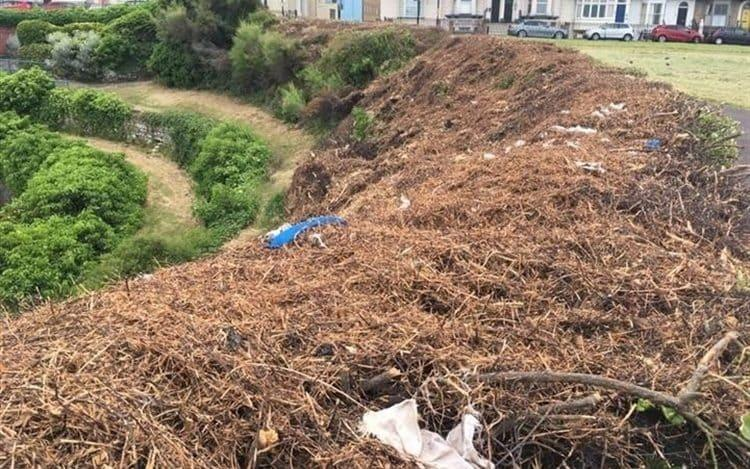 Residents have said that they have seen evidence of destroyed bird nests