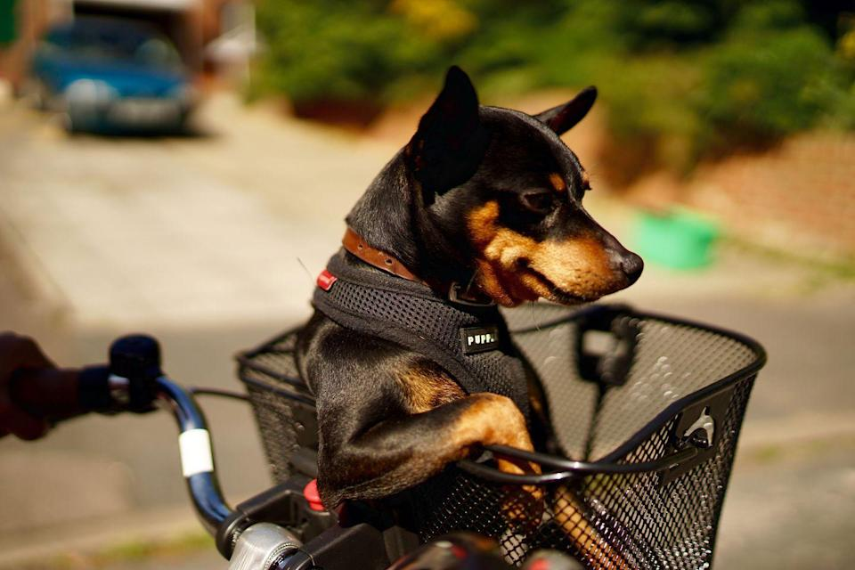 """<p>""""Just chilling, you?"""" — this dog. </p>"""