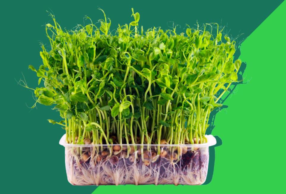 Microgreens: The health food trend that could provide global nutrition security