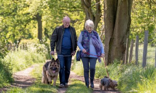 23 Walks review – dog-lovers follow the path to romance