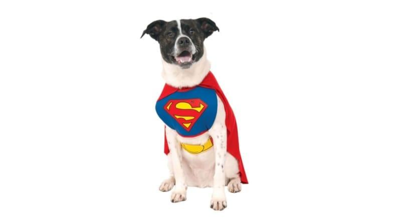 In this getup, your mutt can rescue you right back.