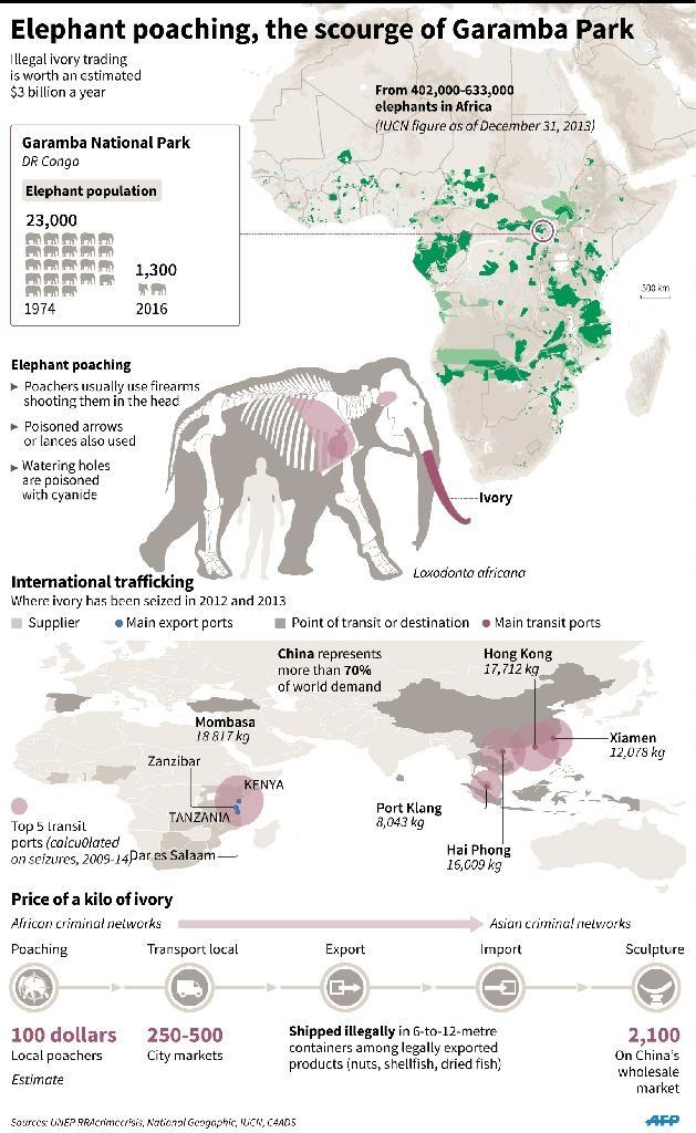 Map, illustration and figures detailing the ivory poaching trade, its affect on Garamba National Park in the Democratic Republic of Congo and showing the main transit routes for the stolen ivory. (AFP Photo/)