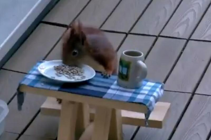 WATCH: This Adorable Squirrel Visits a German Family Everyday and Has its Own Dining Table