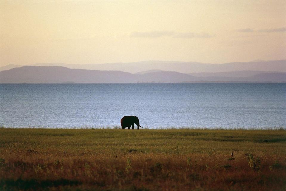 <p>Lone elephant at Lake Kariba, Zimbabwe // March 18, 2016</p>