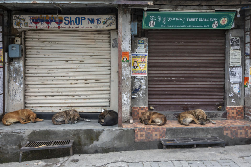 Street dogs sleep at a market as shops remain closed due to the COVID-19 pandemic in Dharmsala, India, Wednesday, May 5, 2021. India's government is facing calls for a strict lockdown to slow a devastating surge in coronavirus infections. (AP Photo/Ashwini Bhatia)