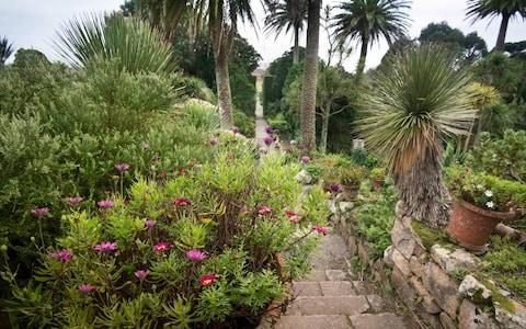 Tresco Annual Flower Count, Tresco Abbey Garden, Isles of Scilly. - Credit: Emily Whitfield-Wicks