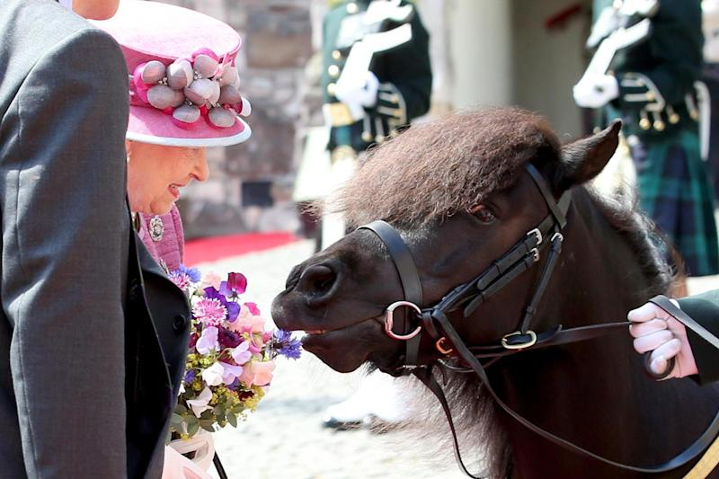 The Shetland pony previously made headlines for attempting to take a bite out of the Queen's posy in July 2017 (PA )