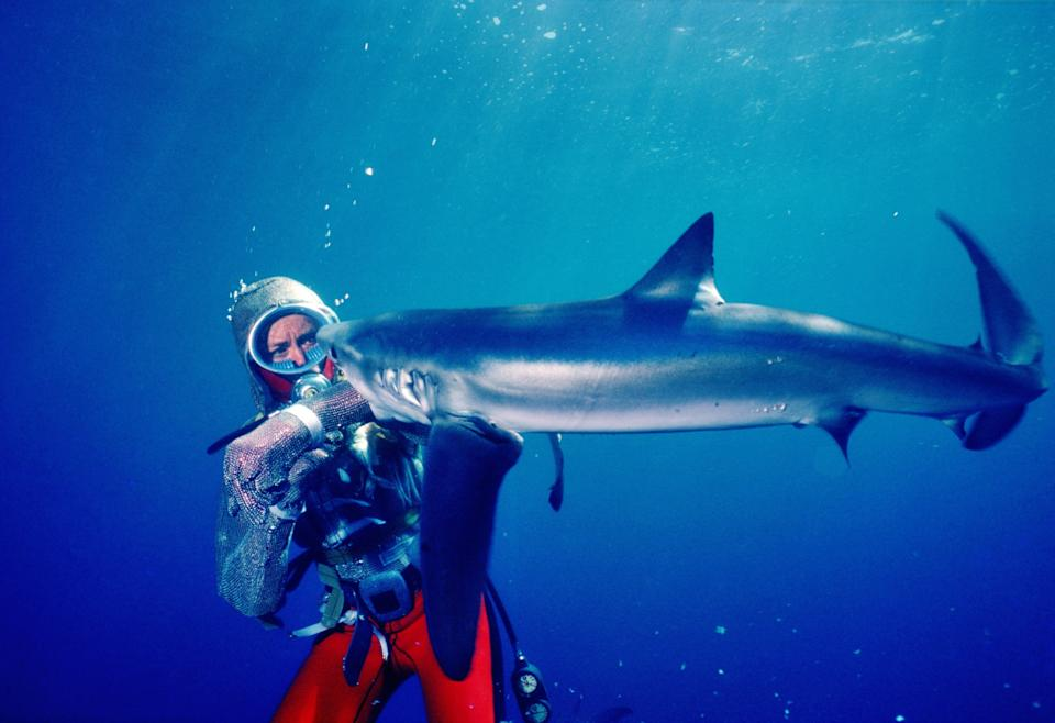 Valerie Taylor has a close encounter with a shark in vintage footage from the new documentary, 'Playing With Sharks' (Photo: Disney+)