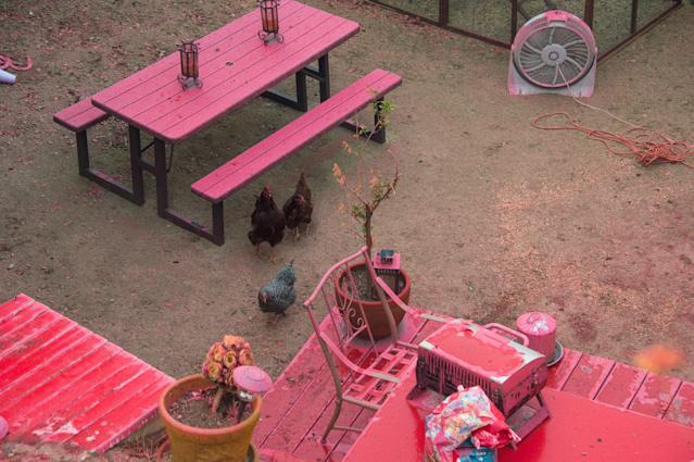 <p>Chickens walk around a backyard covered in pink fire retardant at the Holy Fire in Lake Elsinore, California, southeast of Los Angeles on Aug. 10, 2018. (Photo: Robyn Beck/AFP/Getty Images) </p>