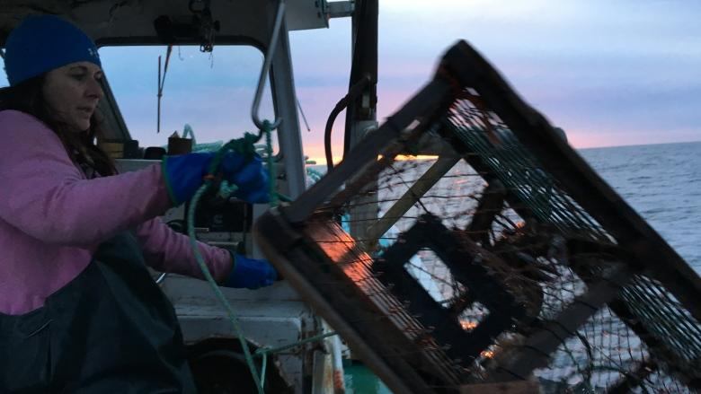 Pulling the traps: P.E.I. fishermen bring lobster ashore Monday