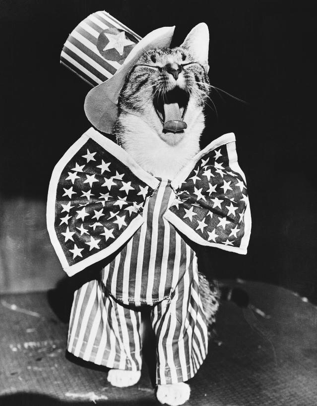<p>This feline Uncle Sam is all dressed up for the Fourth of July in New York City, 1956. (Photo: Bettmann Archive/Getty Images) </p>