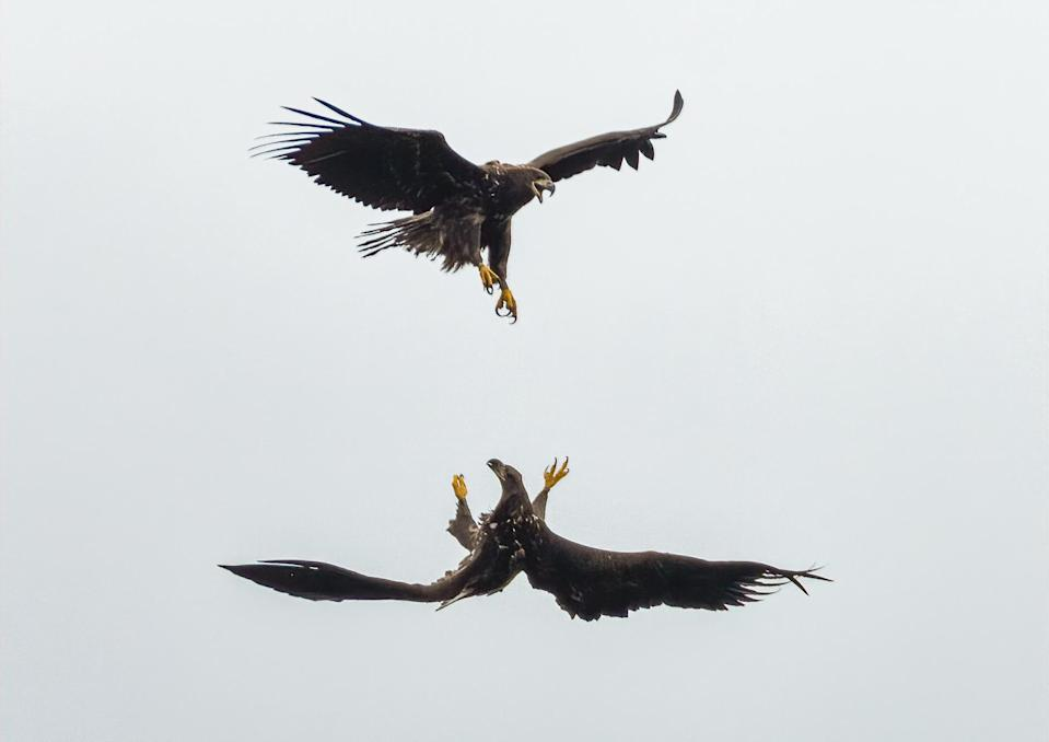 Two birds playing together in October (Dan Lowth/PA)