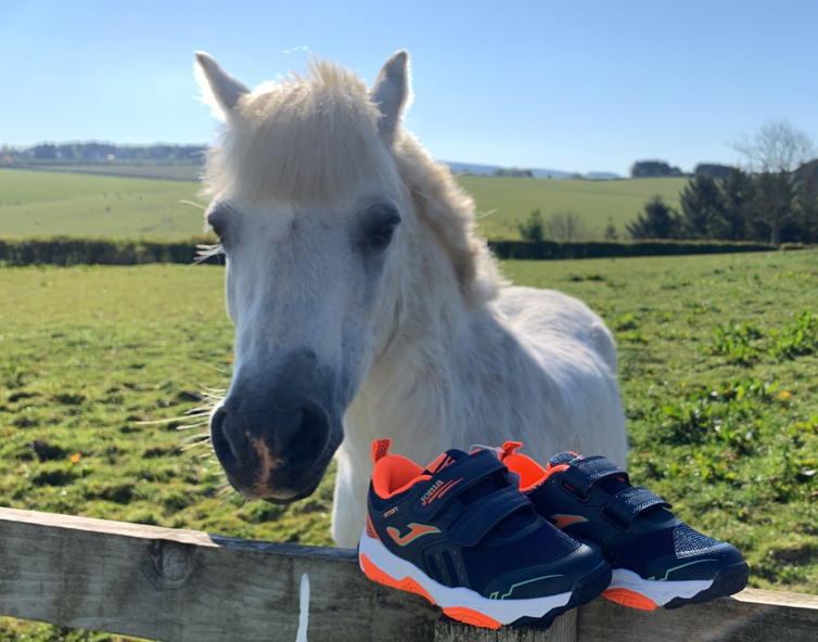 Small white pony looking over a fence with a pair of trainers resting on top.