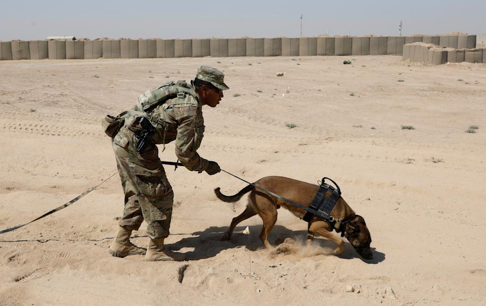 A U.S. army soldier trains a sniffer dog to detect explosive devices at Qayyara airbase west of Mosul, Iraq, August 10, 2017.   REUTERS/Suhaib Salem